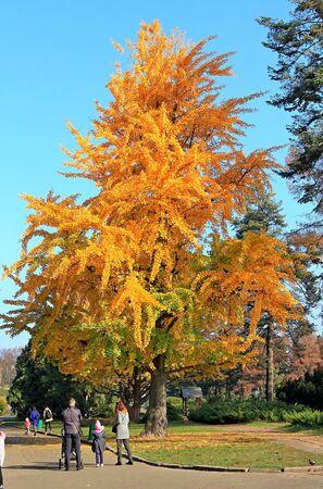 bright autumn colors in the  park Фото со стока - 132730948