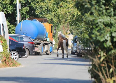 handsome running horse accidentally hit a busy road Фото со стока