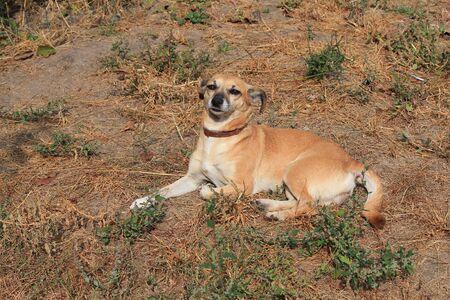 cute dog poses for the photographer Фото со стока - 133099654