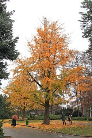bright autumn colors in the city  park Фото со стока - 133168608