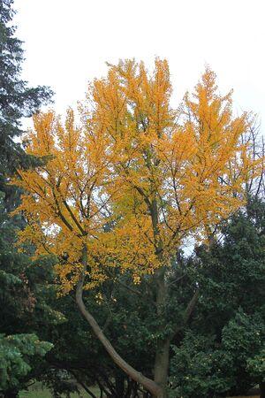 bright autumn colors in the city  park Фото со стока - 133168101