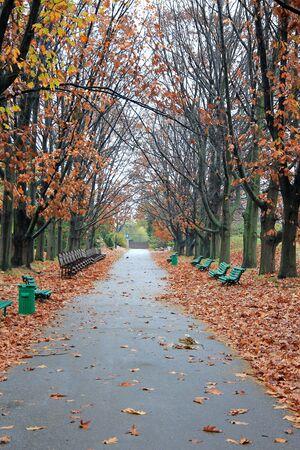 bright autumn alley in a city park Фото со стока - 133167974