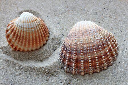 beautiful shells from the bottom of the deep sea Фото со стока