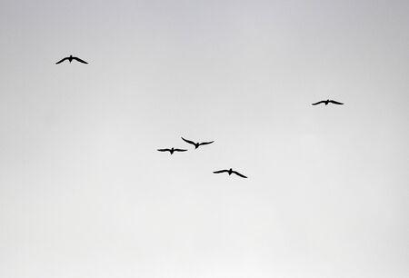 flock of birds flies to the warmer climes Фото со стока