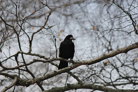 sinister silhouette of a black crow