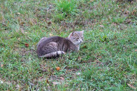 hunter cat tracks down prey in a deserted park