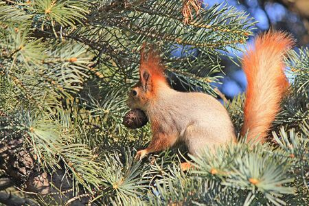 squirrel on a tree nibbles a delicious nut