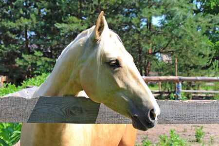 horse with a pensive look wants to go beyond the hedge