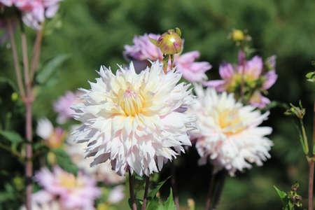 bright beautiful flowers in botanical garden