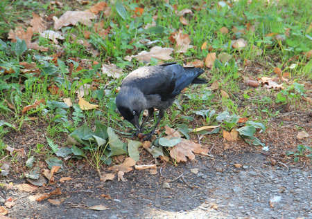 starling found delicious food in the grass