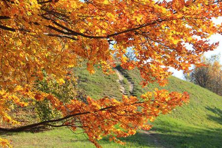 golden autumn in the botanical garden