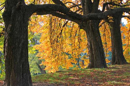 bright view in the autumn botanical garden