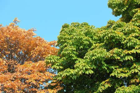 bright autumn multicolored in the botanical garden Фото со стока