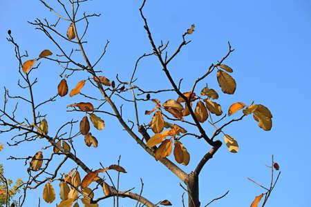 mid autumn view in botanical garden