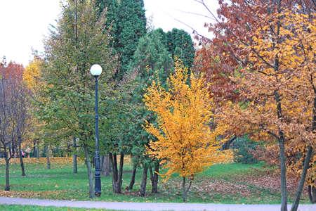 cute cozy corner in the autumn park