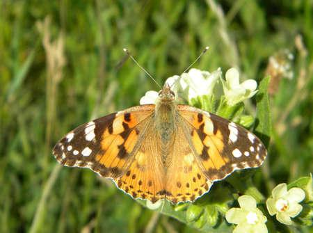 Eine Kleine Motte Auf Einigen Weißen Blüten Lizenzfreie Fotos ...