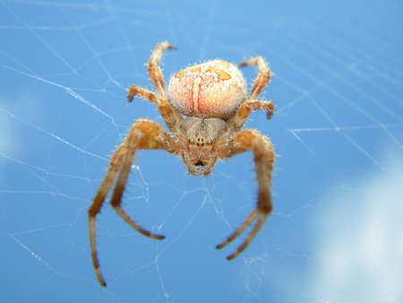 A spider in the web Stock Photo - 18272307