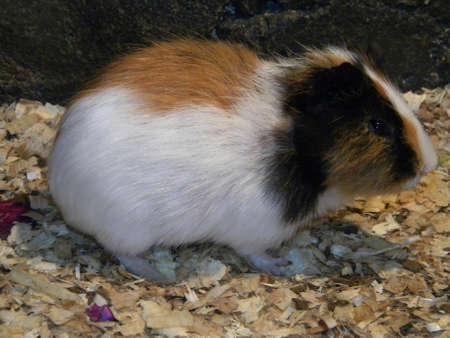 roedor: Un roedor de espera