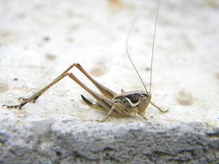 Alittle grasshopper on cement