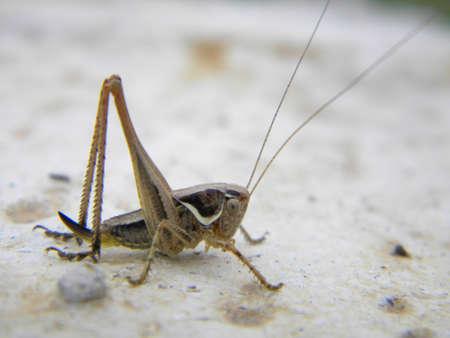 A grasshopper with long antennas  Reklamní fotografie