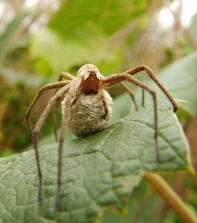 Spider mother on a leaf