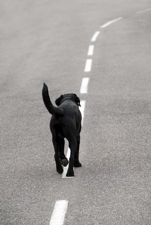 abandonment: stray dog