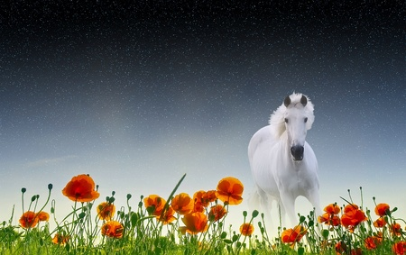 horse and poppies