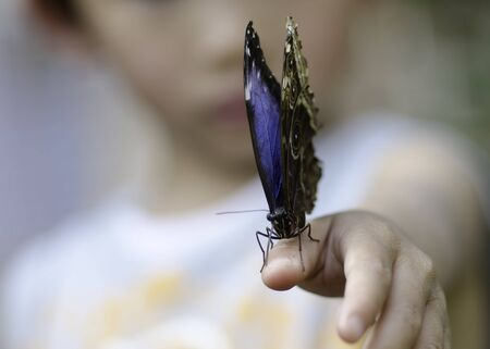 natue: a butterfly landed on kids hand