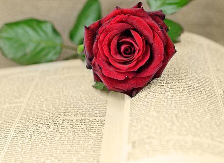 een open boek bedekt met een rode roos Stockfoto