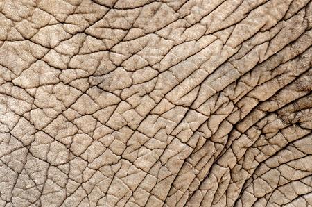 closeup view of an elephant skin
