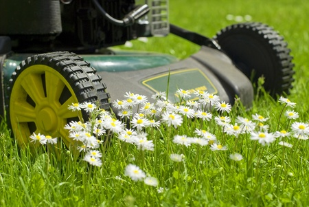 a lawnmover surrounded by flowers in the lawn