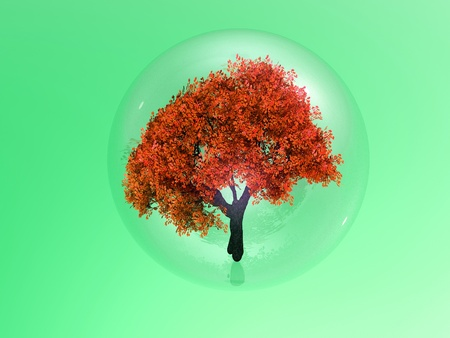 buble: a tree in a buble