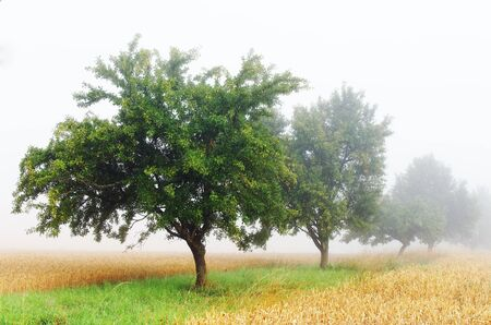 cocaine: misty atmosphere ine the countryside