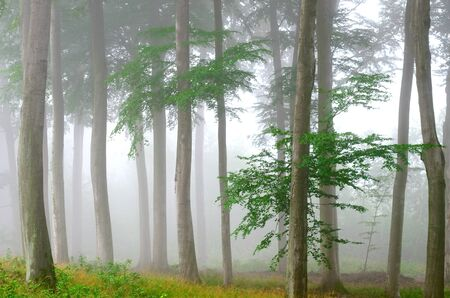 A misty forest Stock Photo