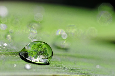 A drop on plant leaf with a tree inside Stock Photo
