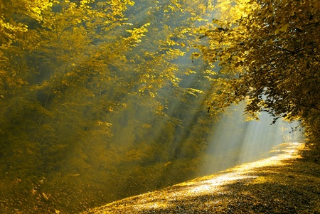 a forest lane illuminated by the sunbeam