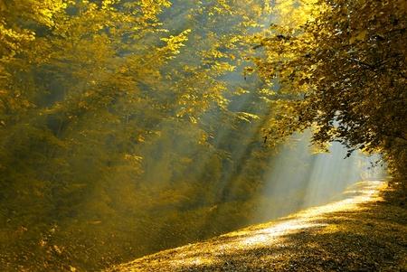 een bos baan verlicht door de zonnestraal