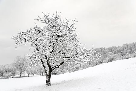 wintertime: wintertime Stock Photo