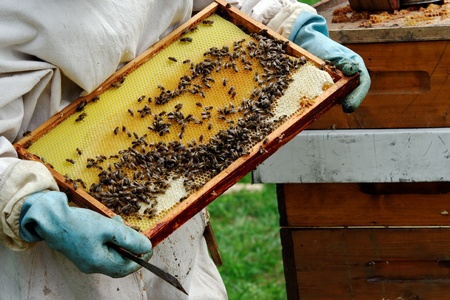 polen: a beekeeper at work