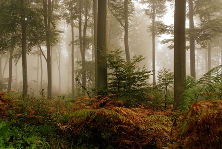 misty atmosphere in the forest Standard-Bild