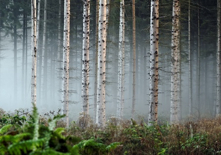 misted: misted forest Stock Photo
