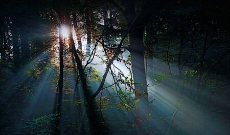 natue: sunlight in the forest