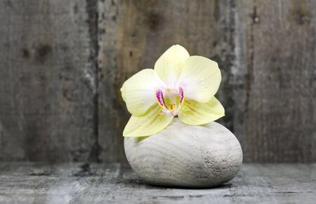 an orchid flower and a stone on wood background