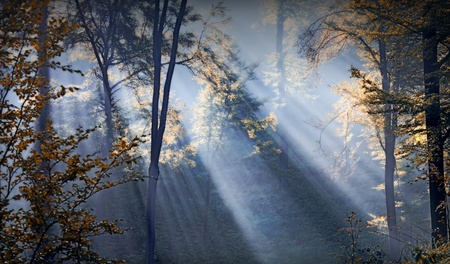 sunbeams in the forest in the fall season photo