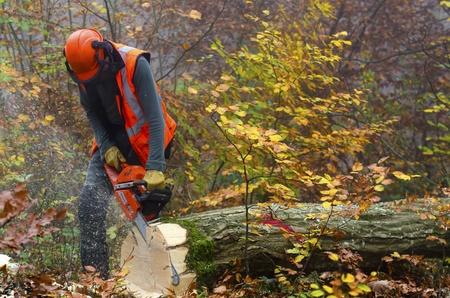 boom kappen: een houthakker aan het werk