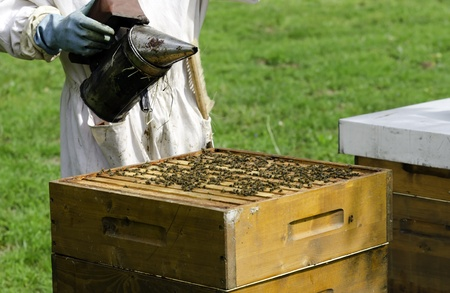 a beekeeper at work