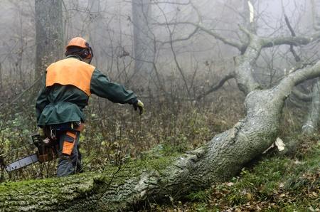 ein Holzfäller bei der Arbeit