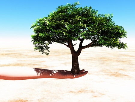 a woman hand with a tree inside photo
