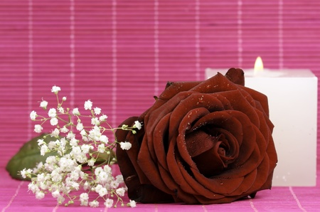 a red rose with a candle in the background photo