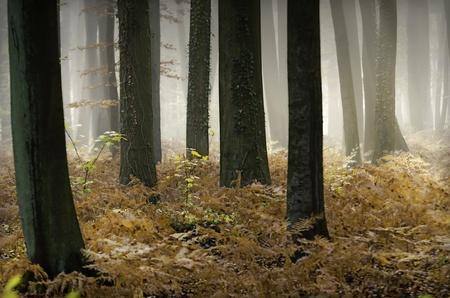 bomen omringd door varens in een mistige bos